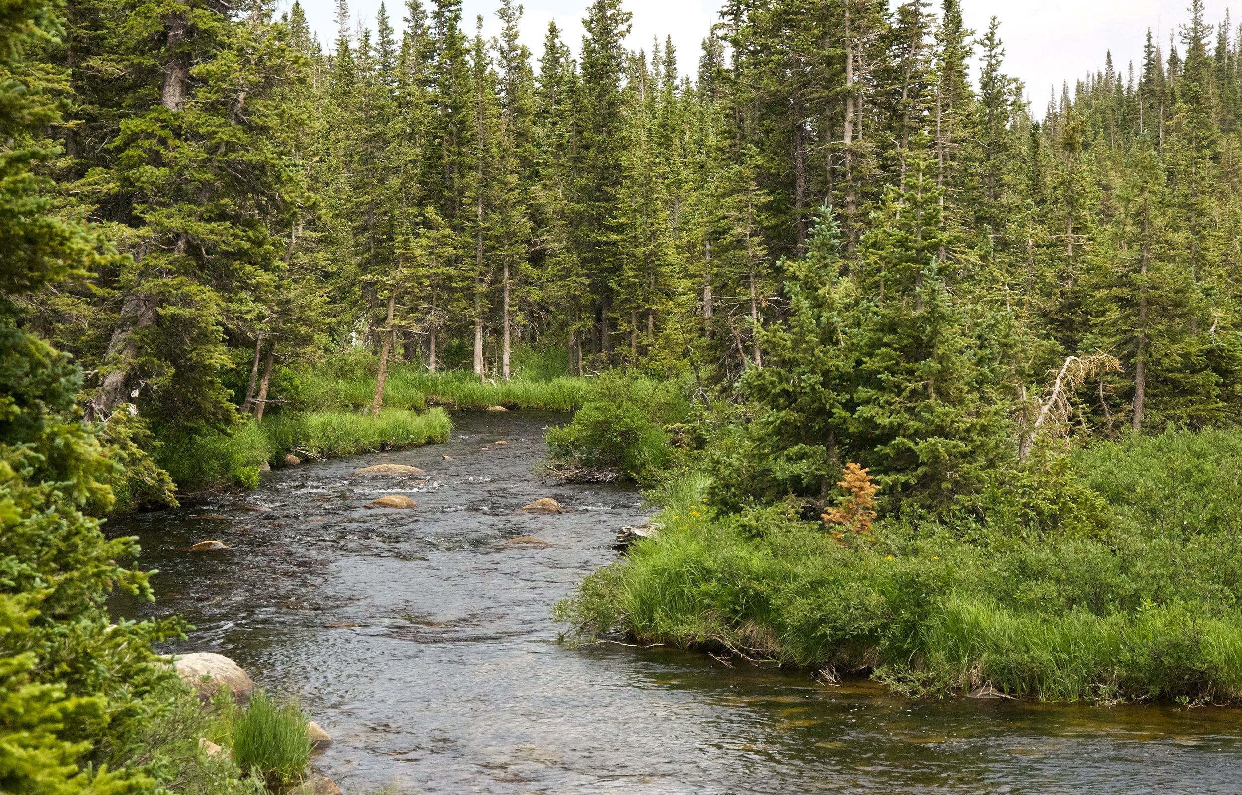 Beautiful South St. Vrain Creek along the Jean Lunning Loop Trail (G.2)