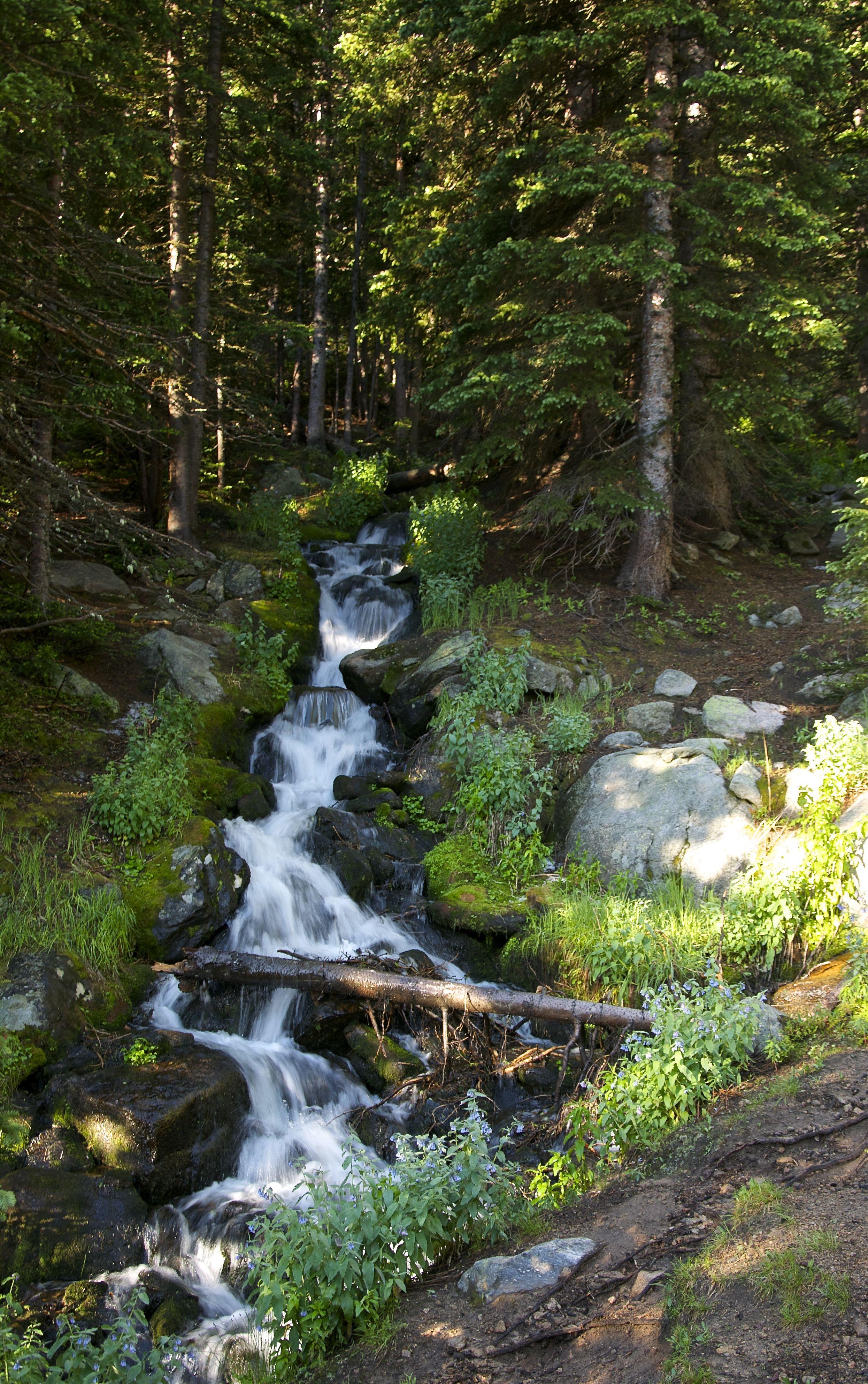 Stream on East Long's Peak Trail