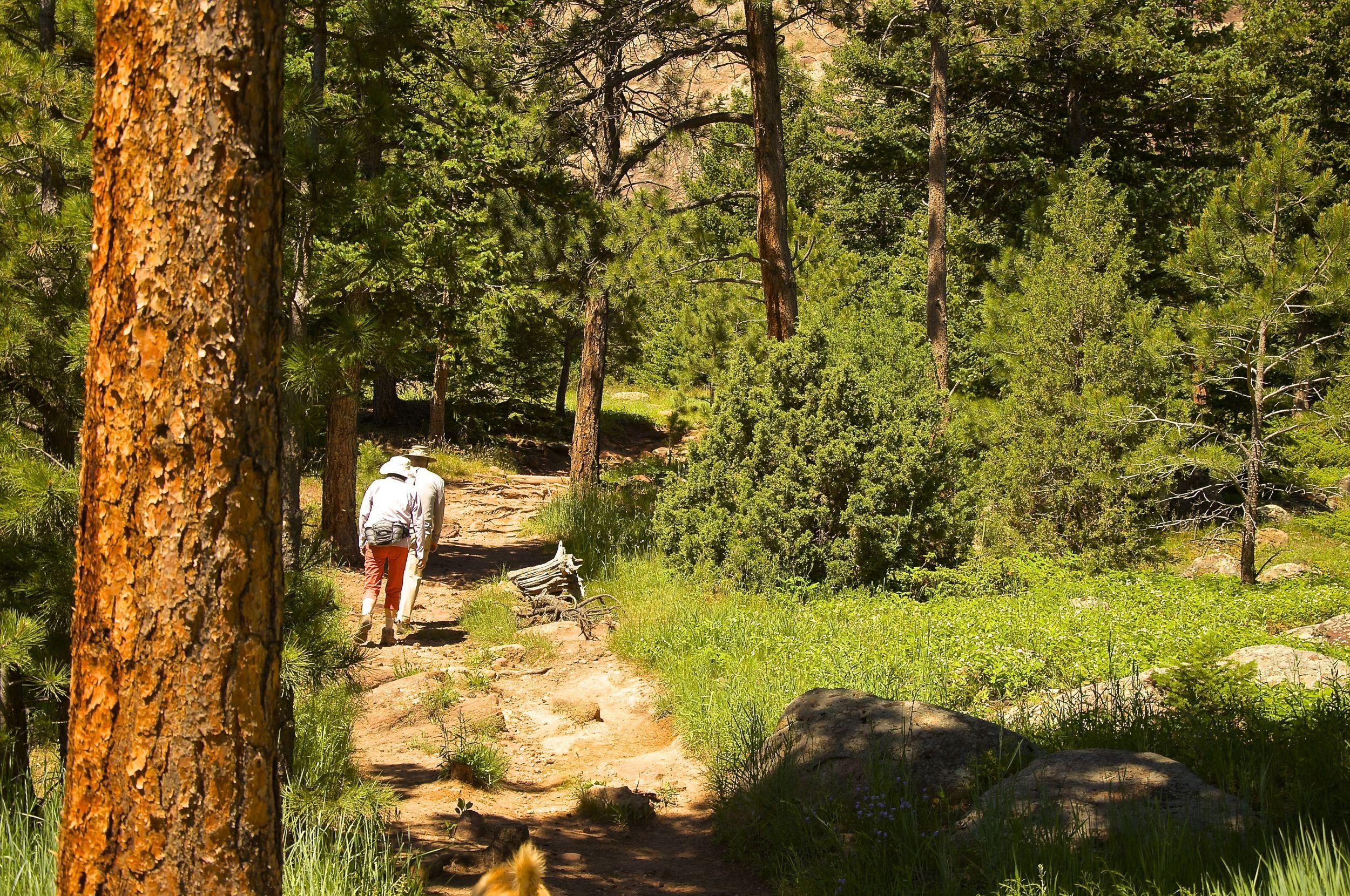 Fern Canyon Trail Boulder