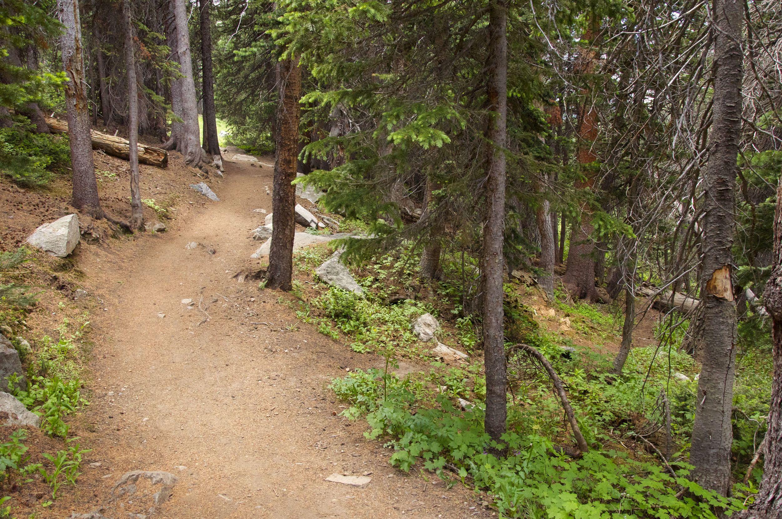 Long Lake Jean Lunning Trail