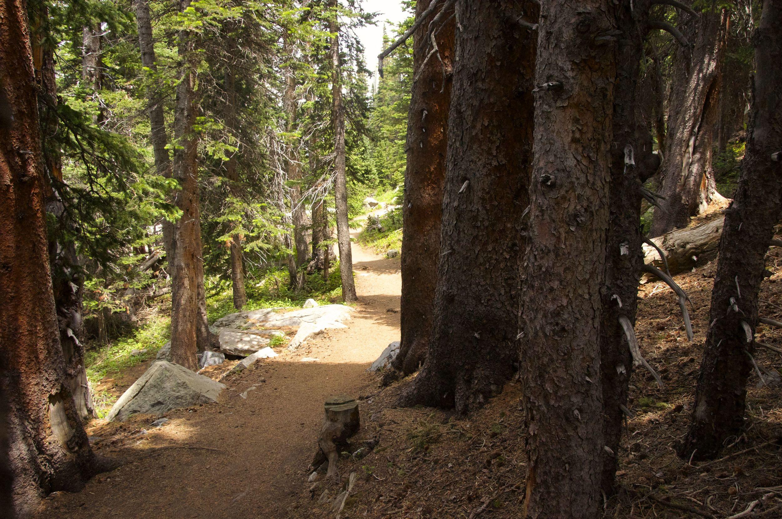 Jean Lunning Loop Trail