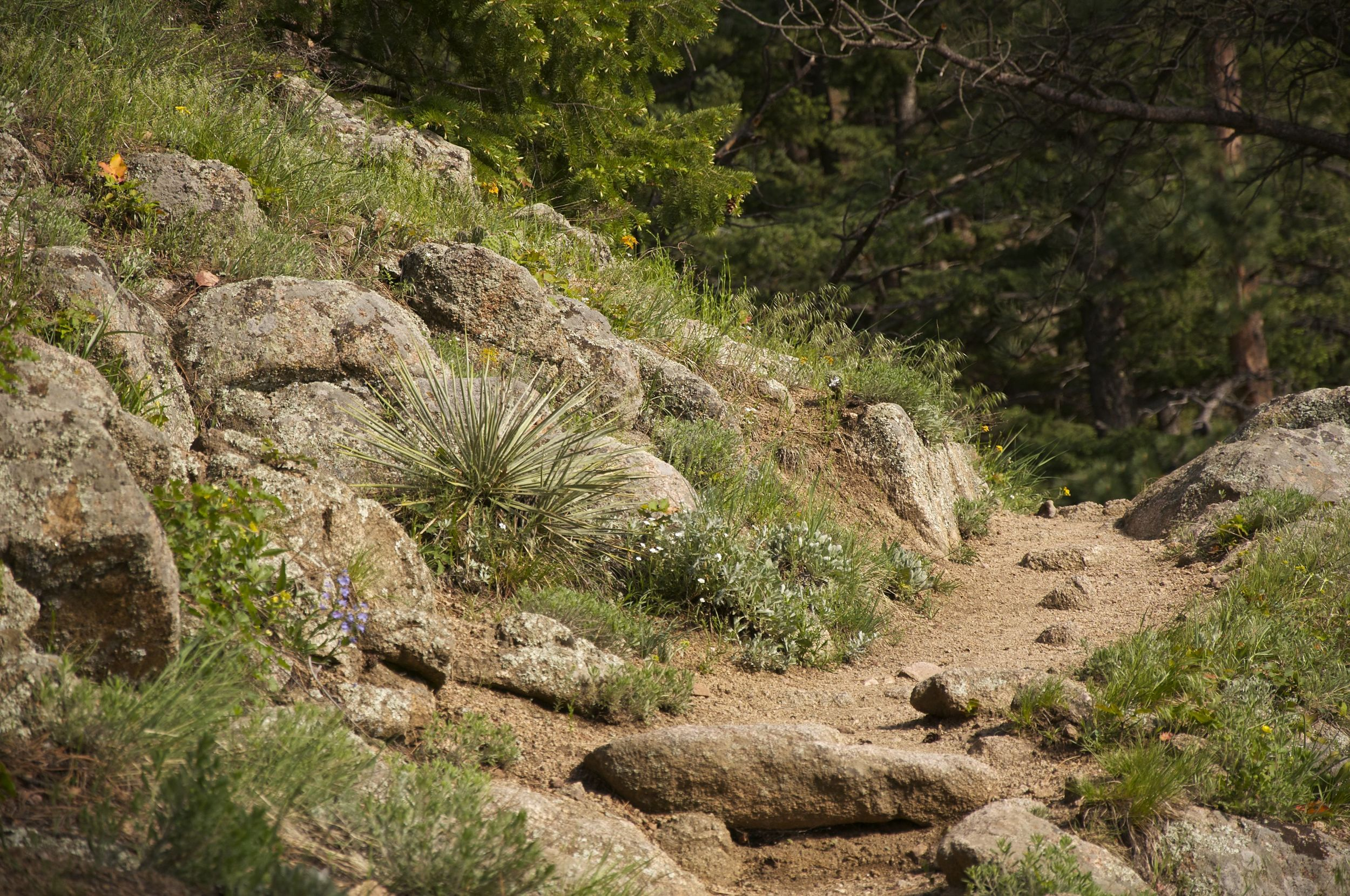 Tenderfoot Trail in Boulder, Colorado, an easy hiking trail