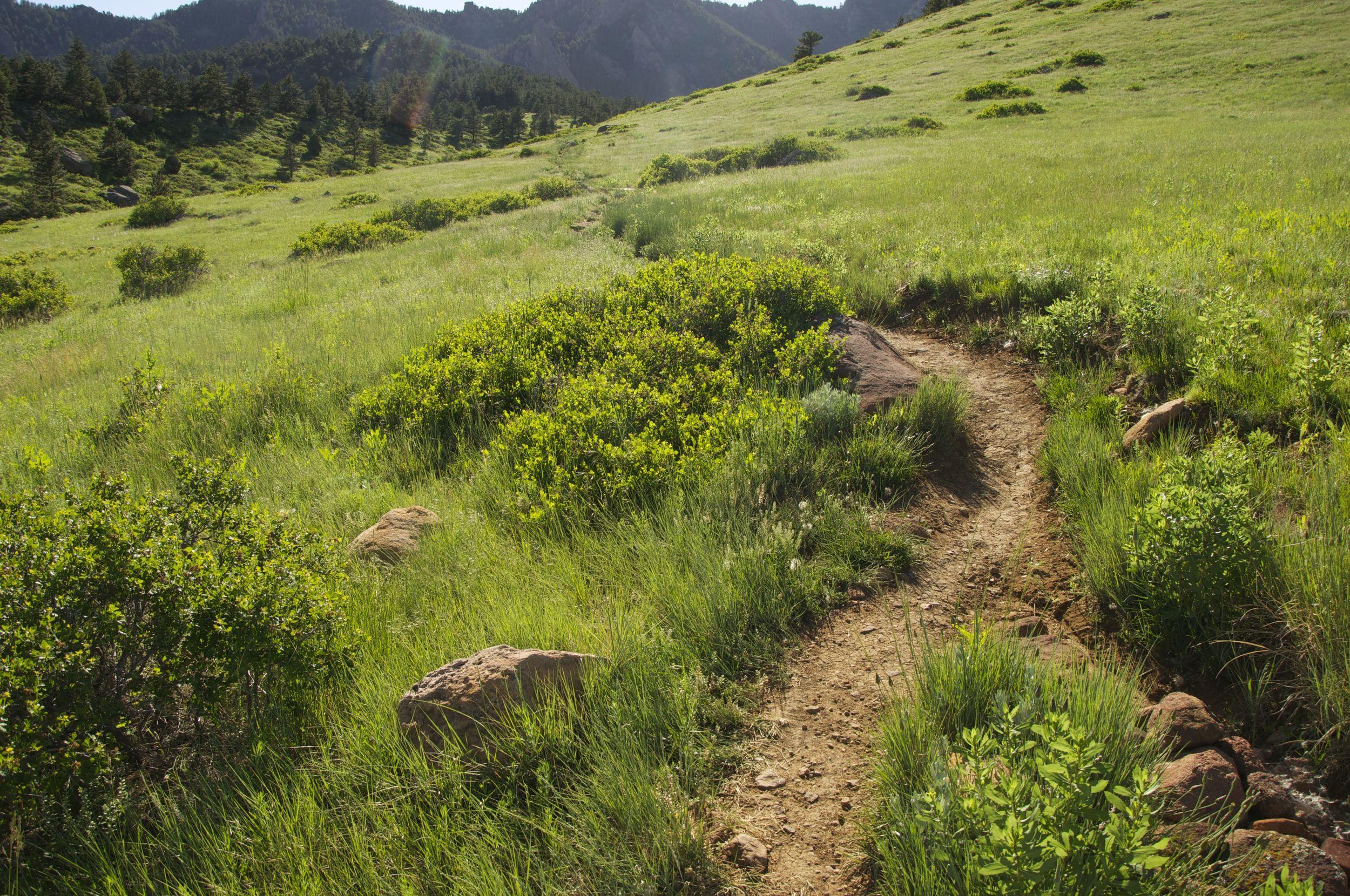 Towhee Trail Boulder