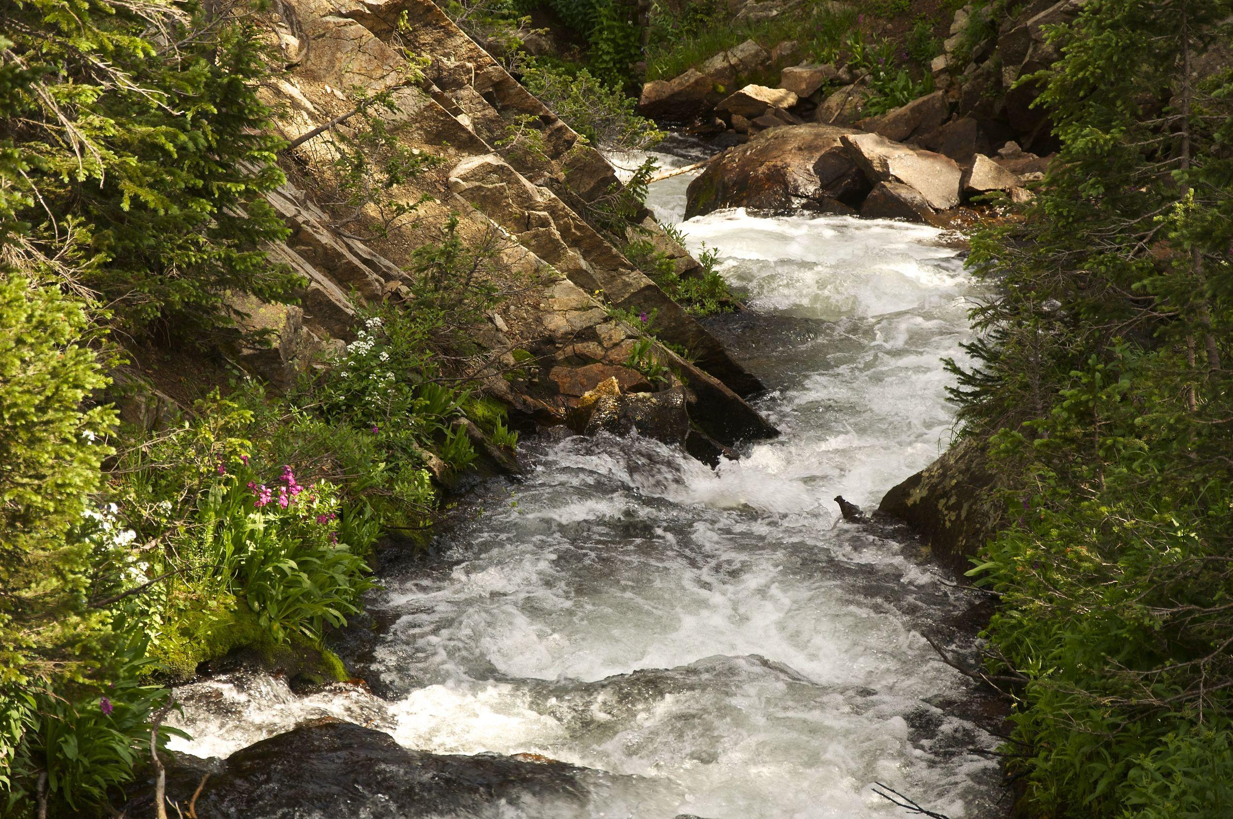 Mitchell Creek