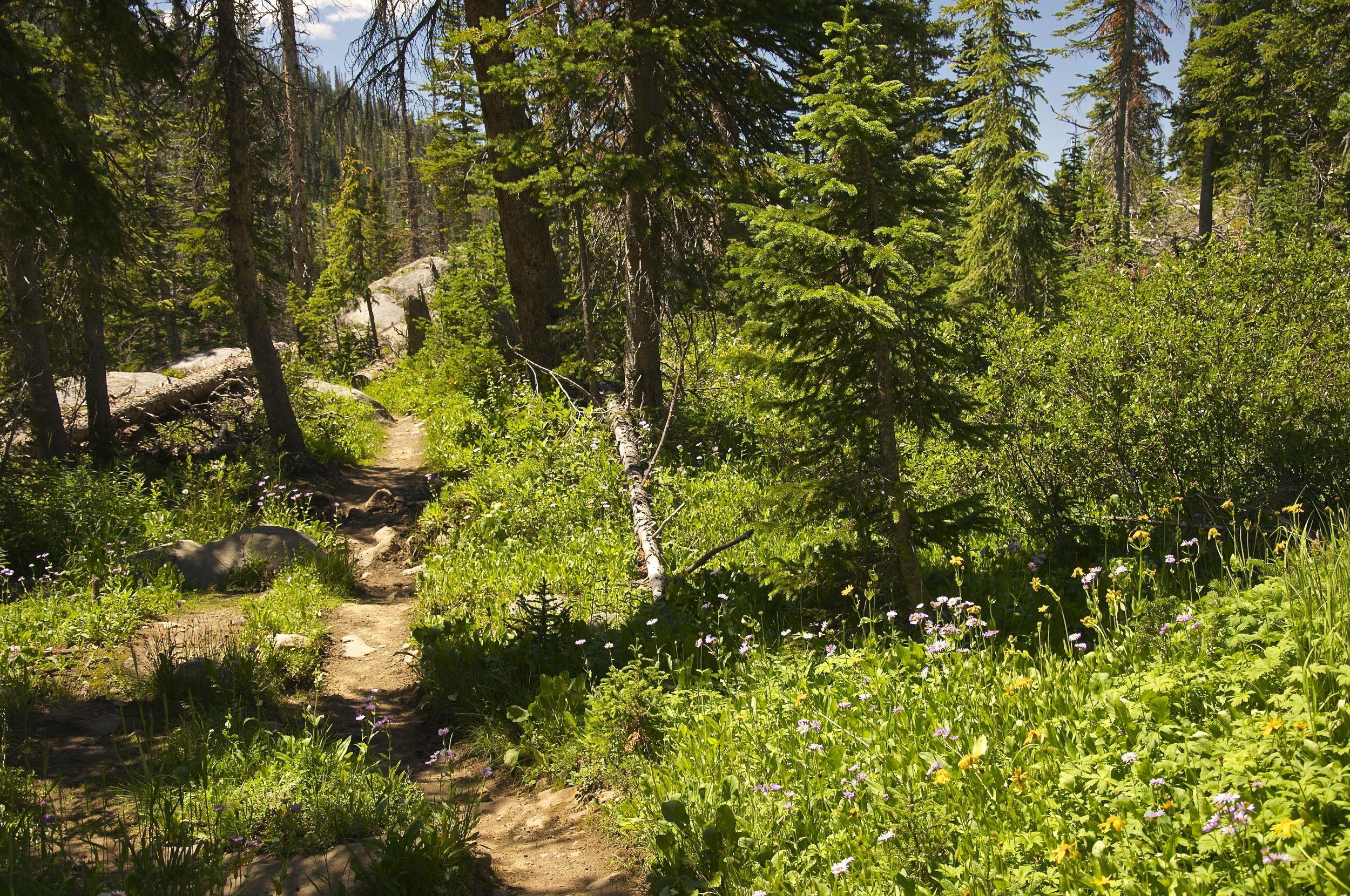 Three Island Lake Trail