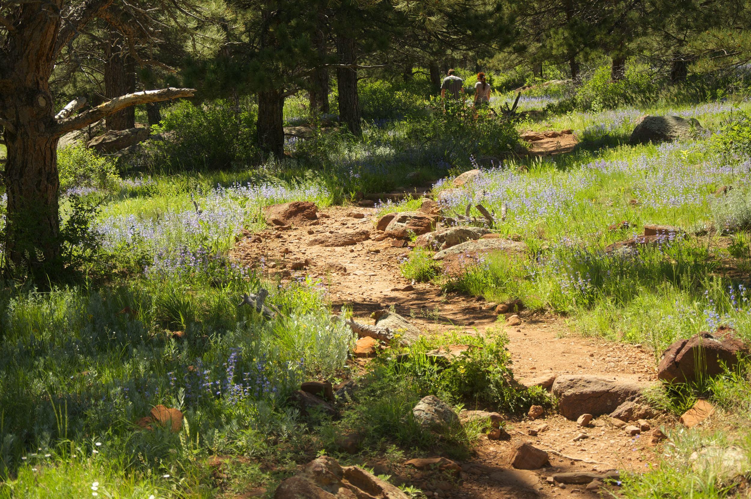 Homestead Trail Boulder