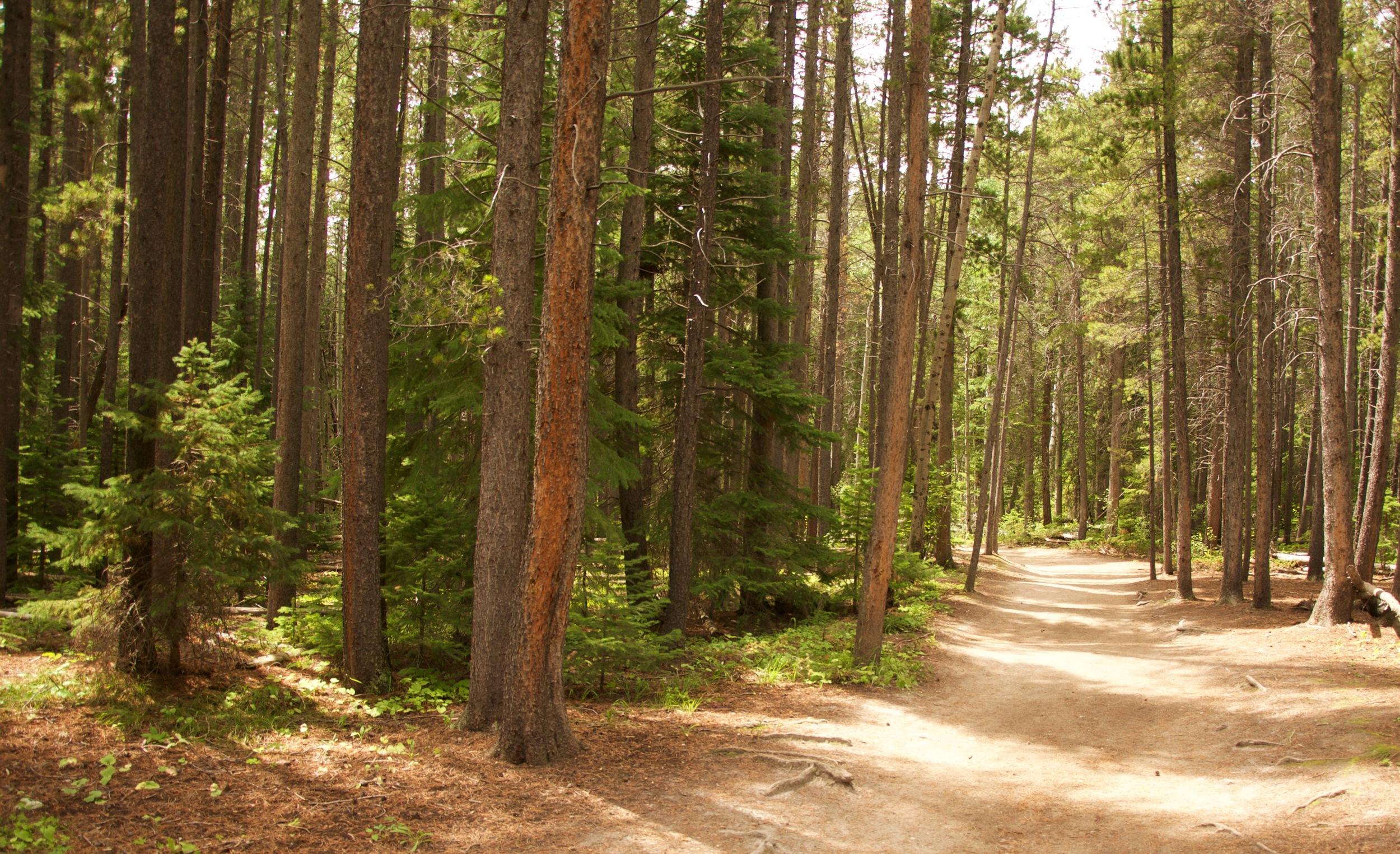 Wild Basin Trail 2