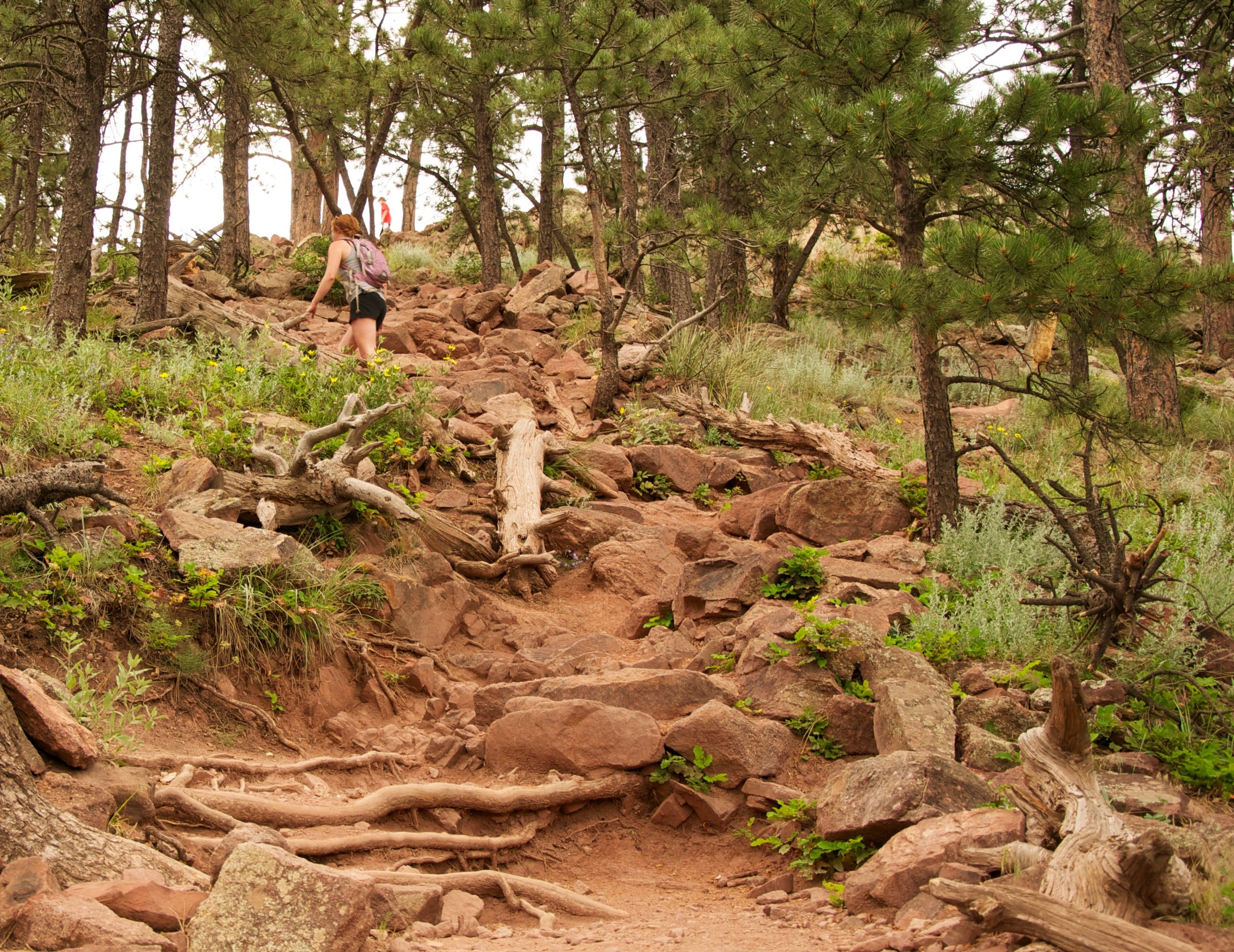 mount sanitas loop -