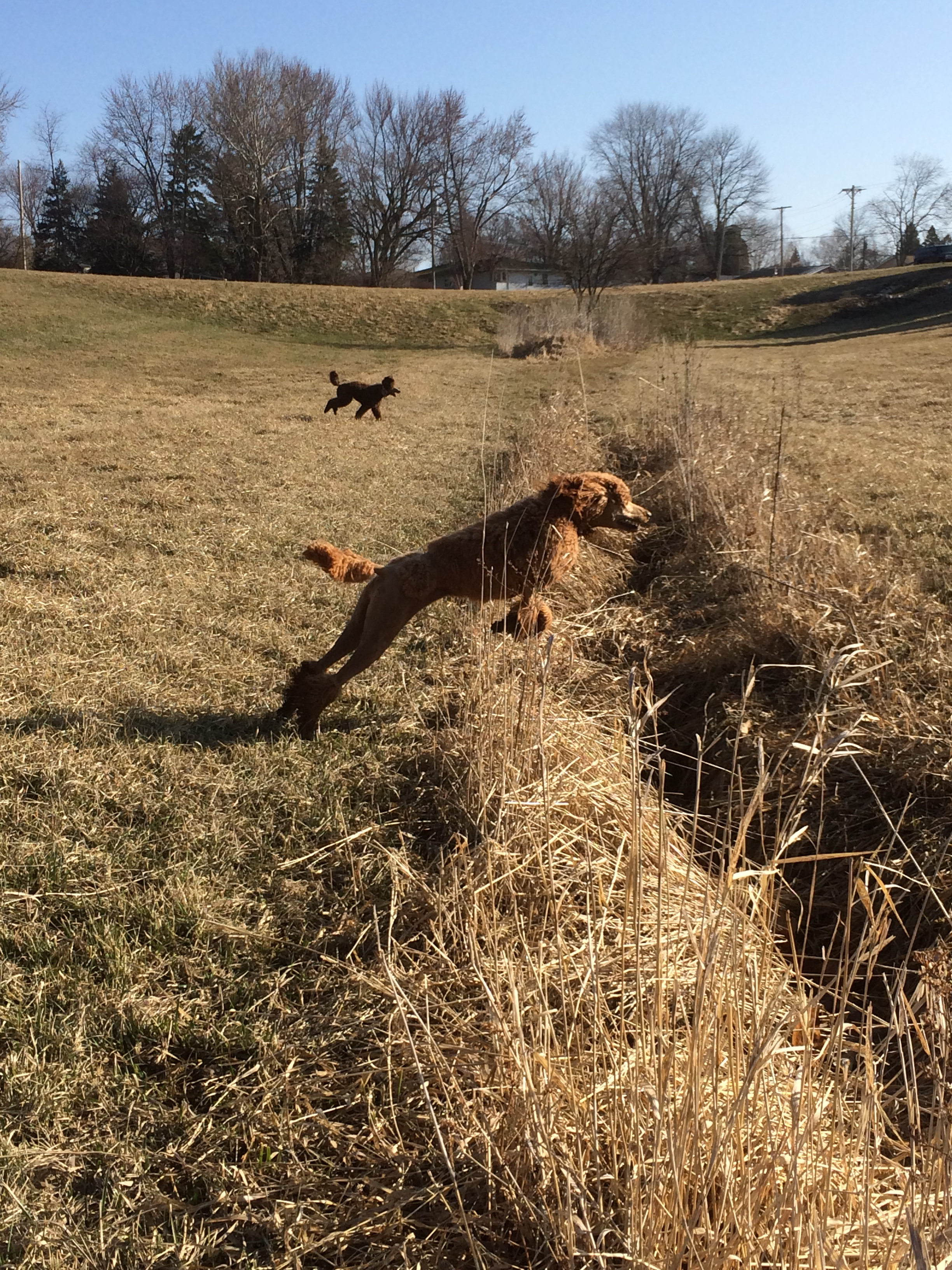 Sienna Leaping for Spring!