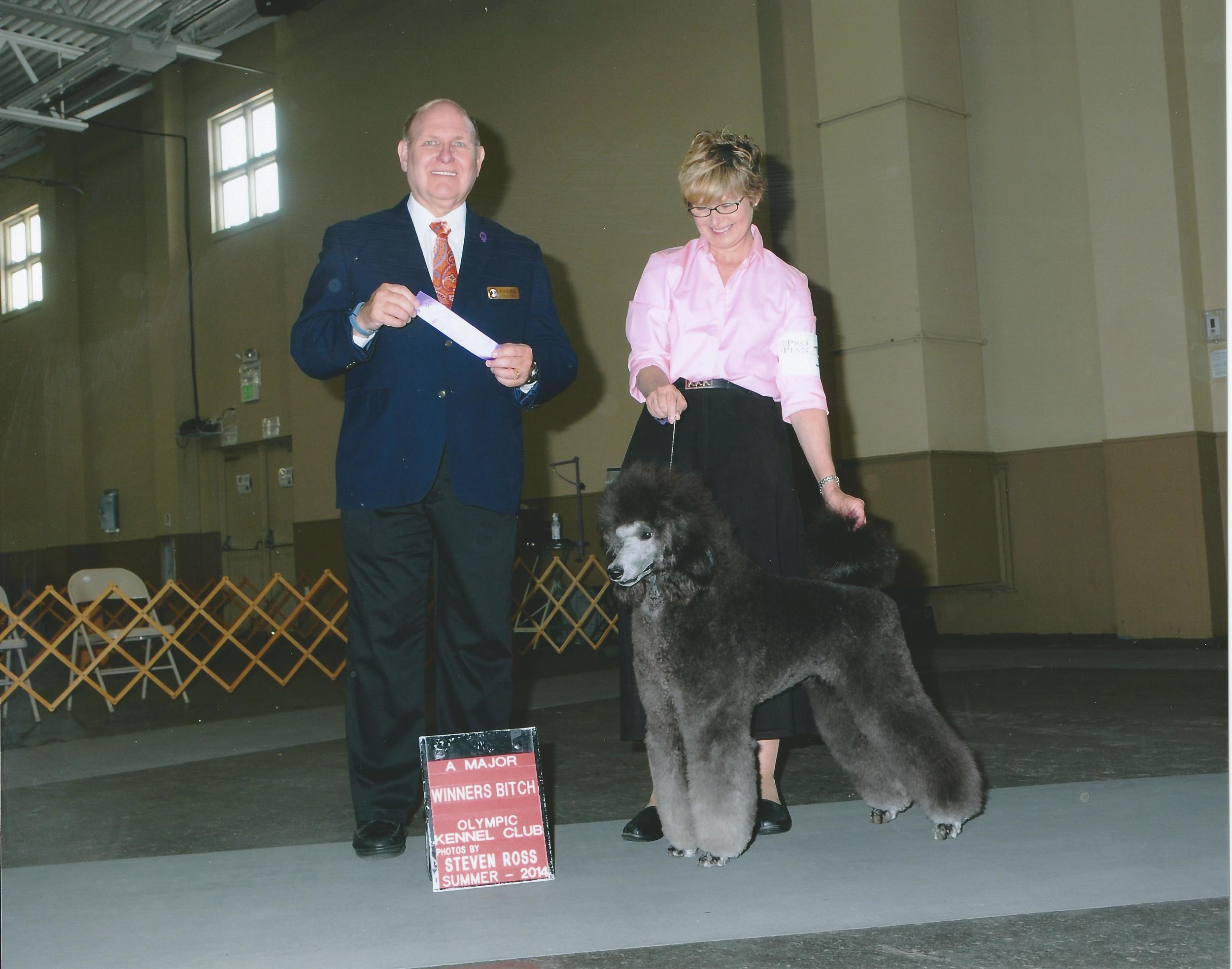 Olympic Kennel Club August 16, 2014 Major   Thank you Judge Mr. Steve Hayden and Handler Taffe McFadden for her beautiful presentation!