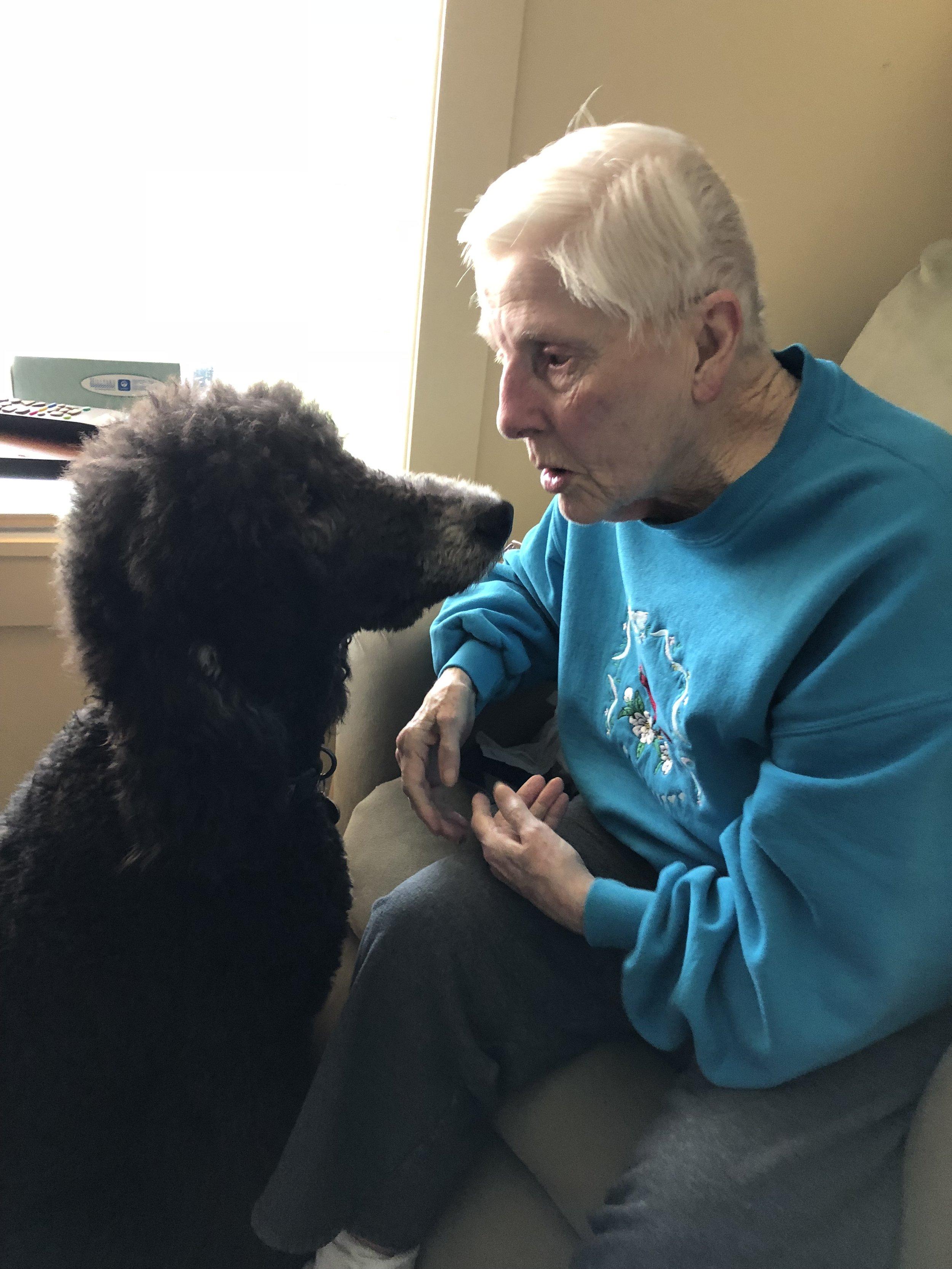 Otis (Siri x Drakkar) is a therapy dog.
