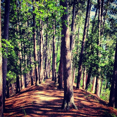 The Minnesota Hiking Club Trail at Scenic State Park winds through the pines on this peninsula