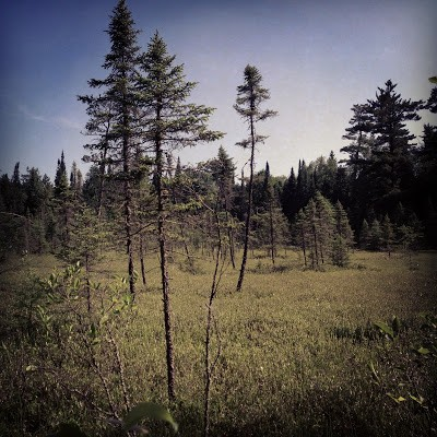 Bog in Scenic State Park. My favorite ecosystem as this blog makes clear.