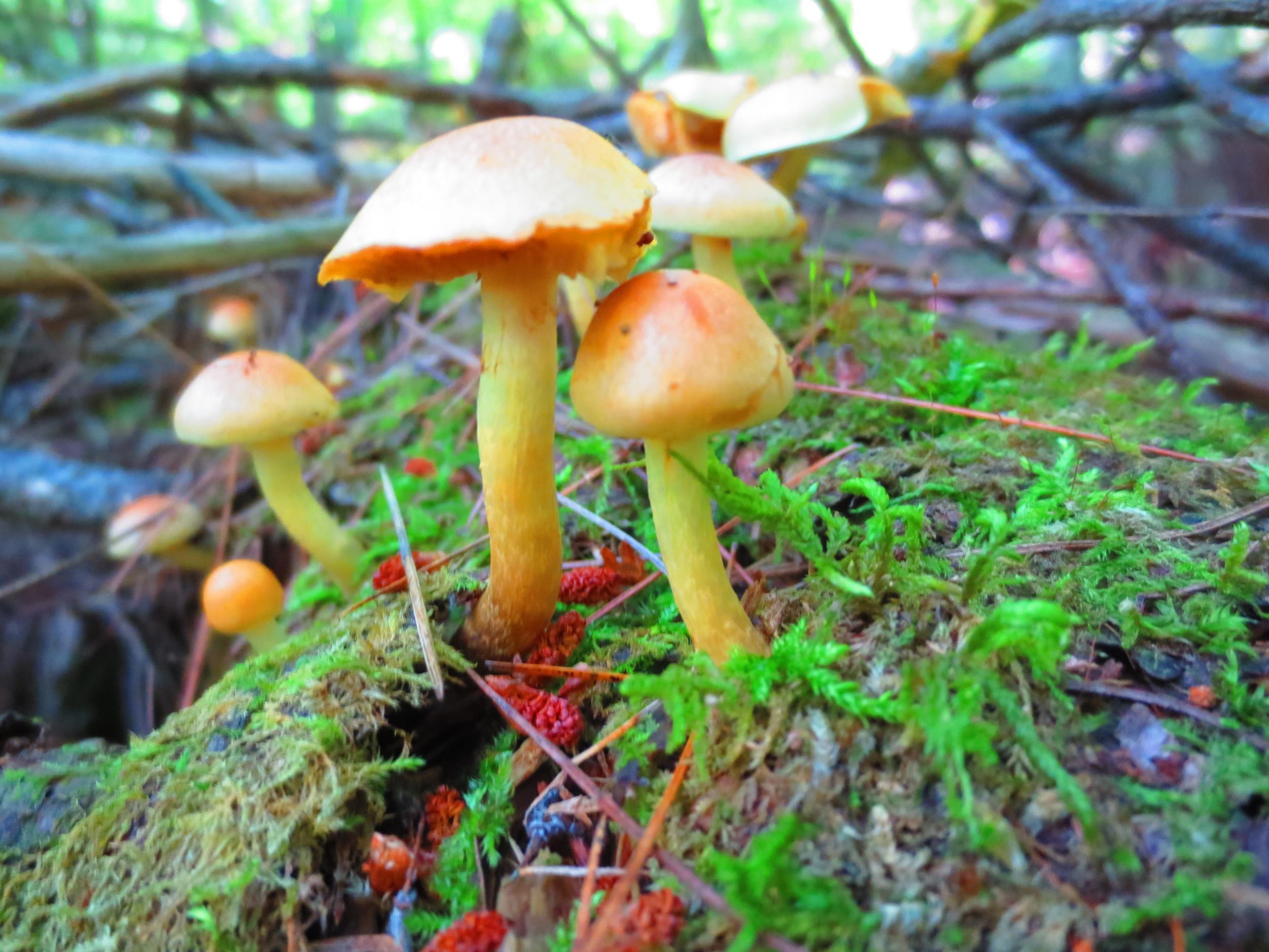 BWCA Mushrooms