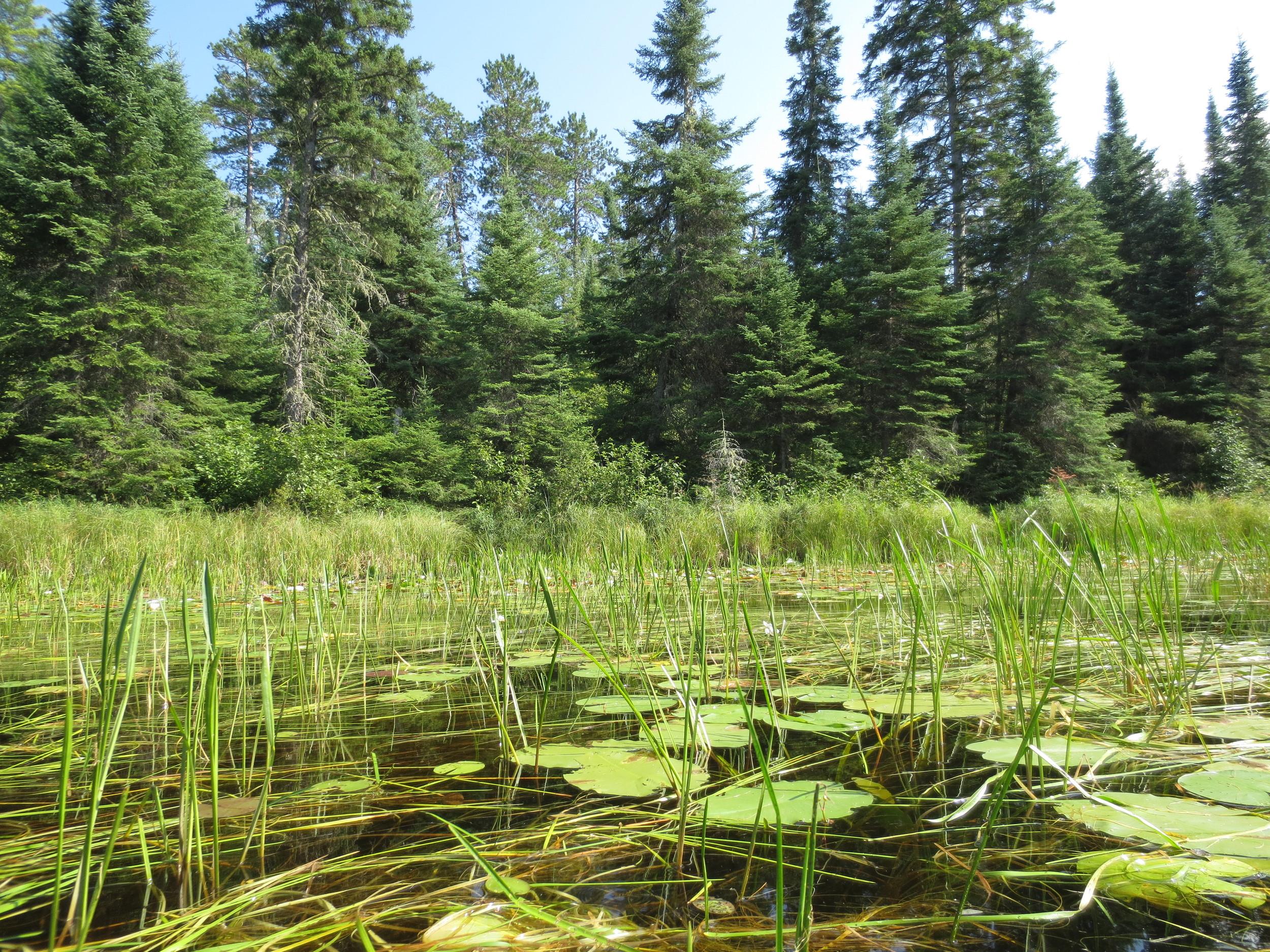 BWCA Marsh
