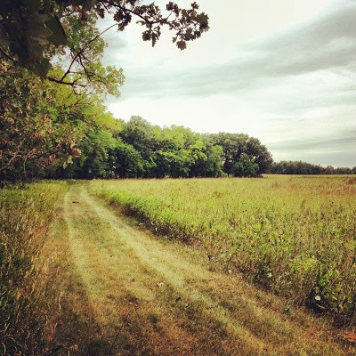Kilen Woods State Park Hiking Club Trail runs through both prairie and oak forests. You see a lot of diversity in the two short miles.