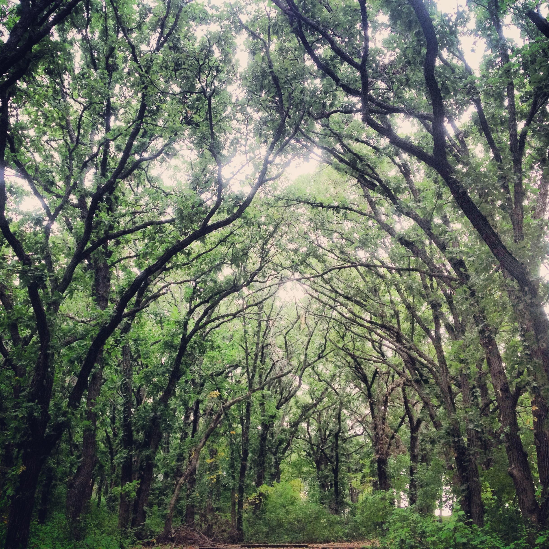 Canopy of Oaks at Kilen Woods State Park