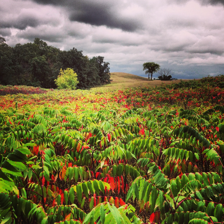 Fall colors - Sumac at Camden State Park