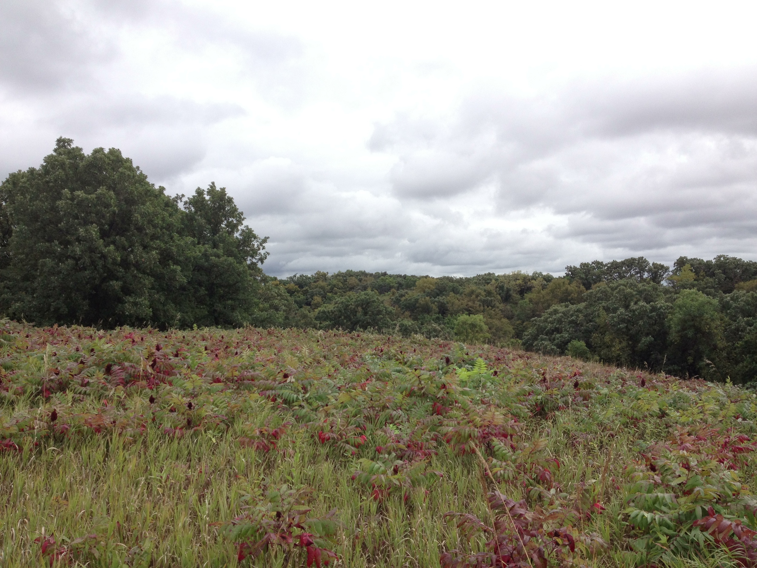 Sumac at Camden State Park