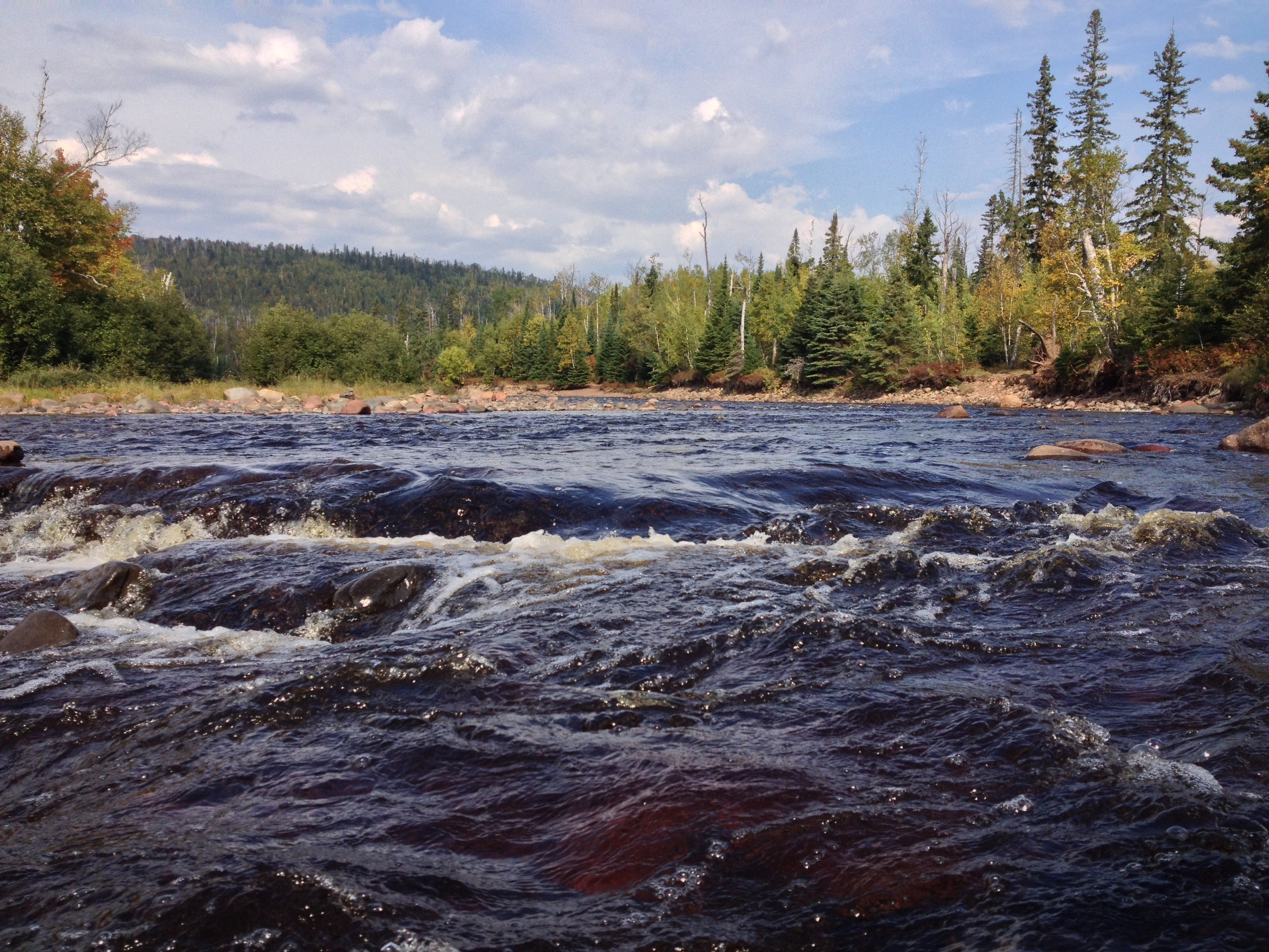 Minnesota wilderness and forests