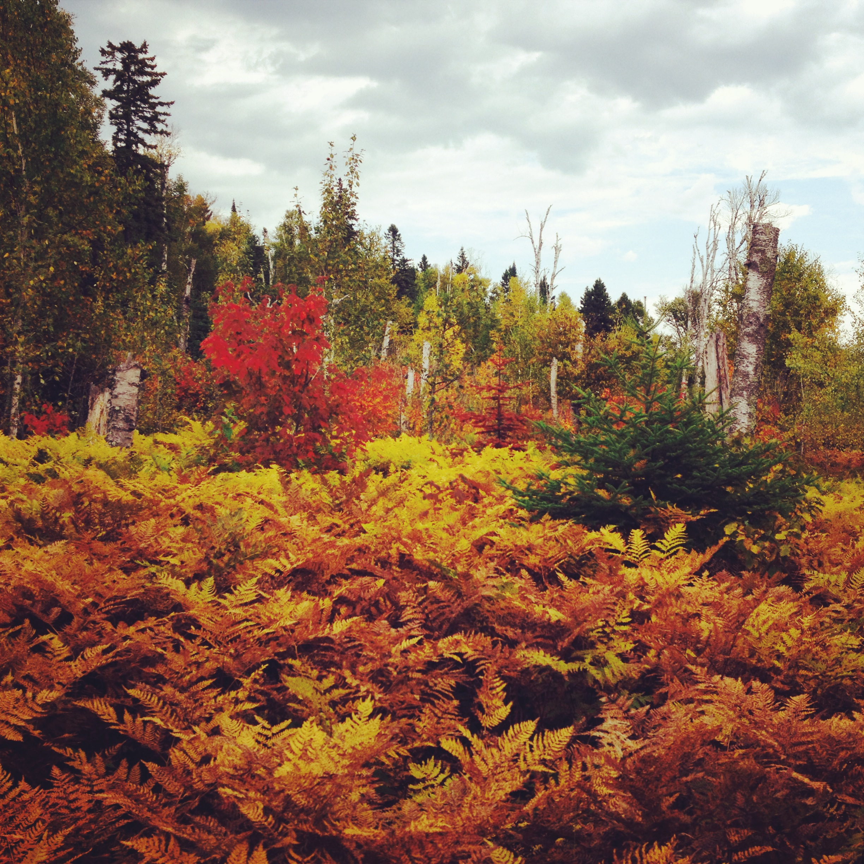 Dead Ferns