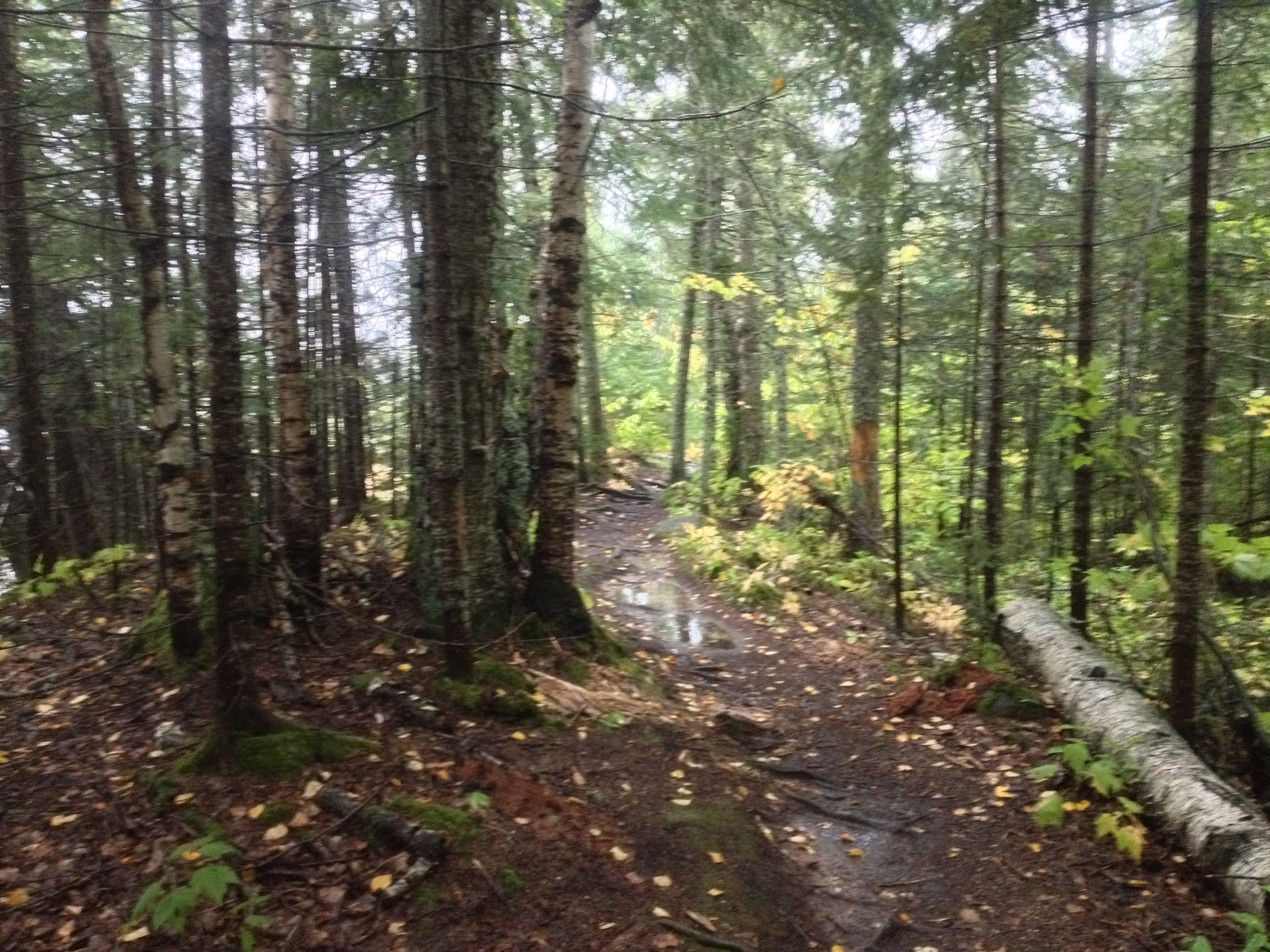 Forest at Grand Portage State Park