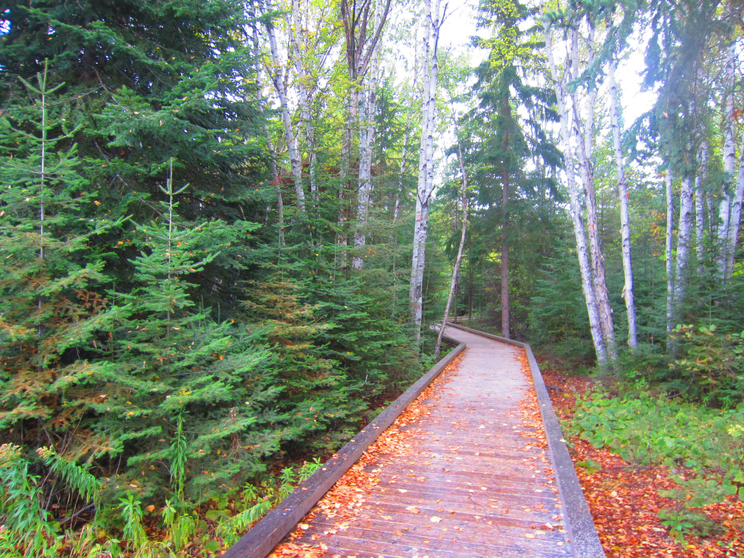 Boardwalk at Grand Portage State Park