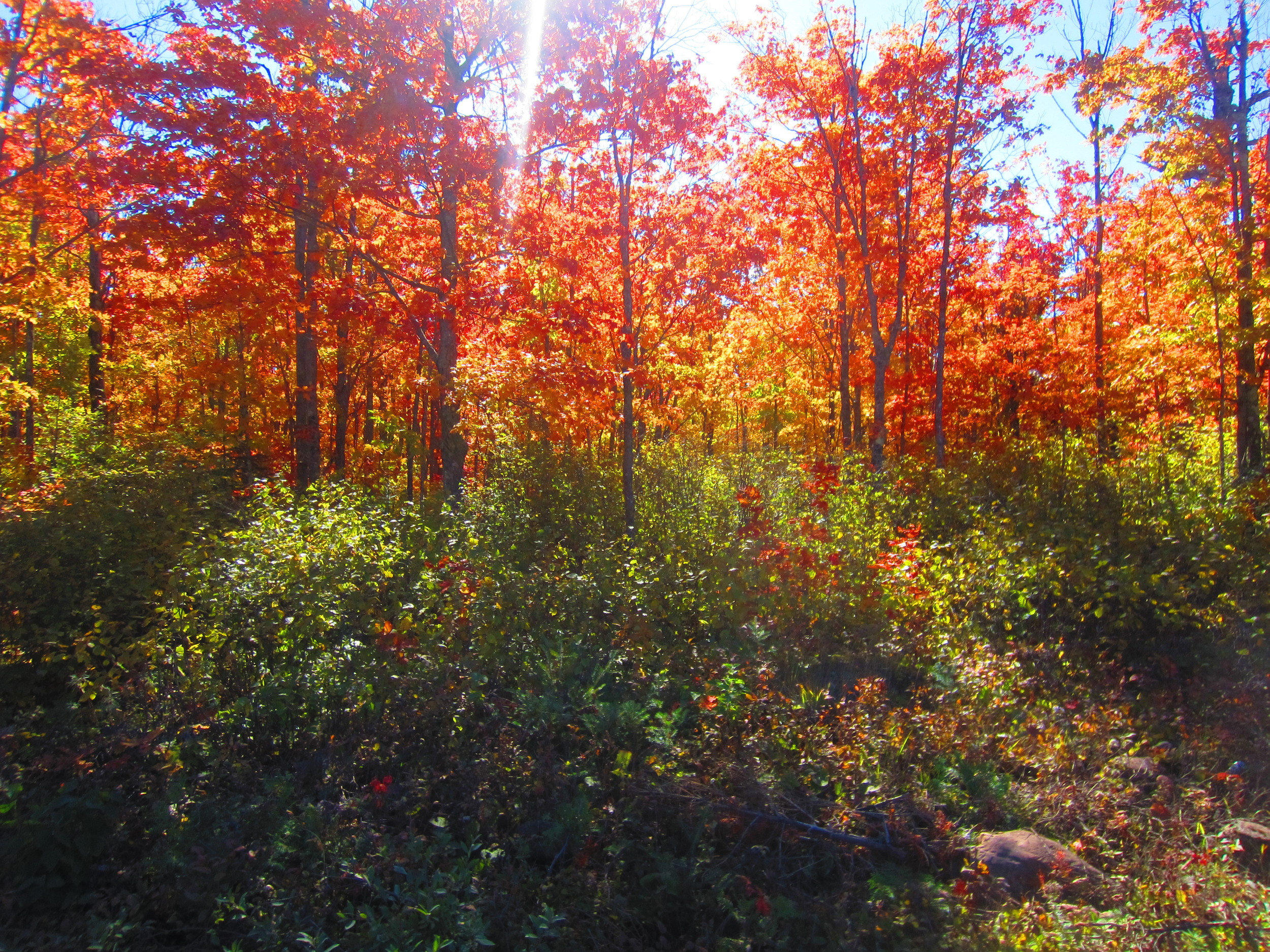 Sun shining through the Fall Colors in Superior National Forest