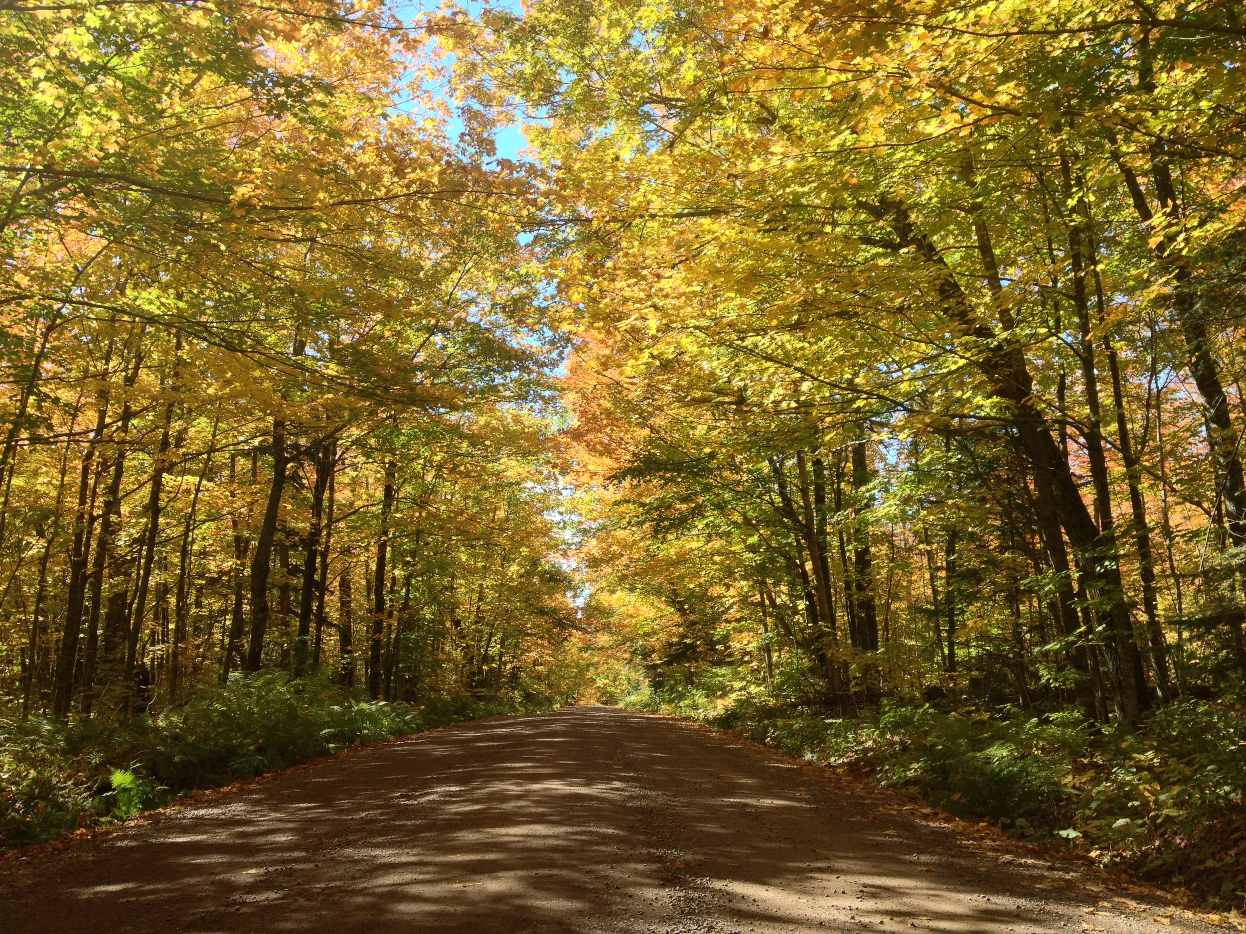 More Fall Colors in Superior National Forest