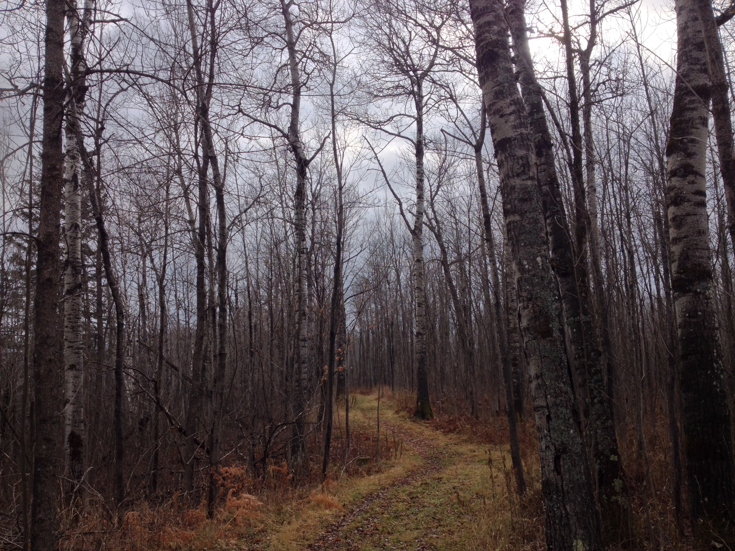 Winding Trails