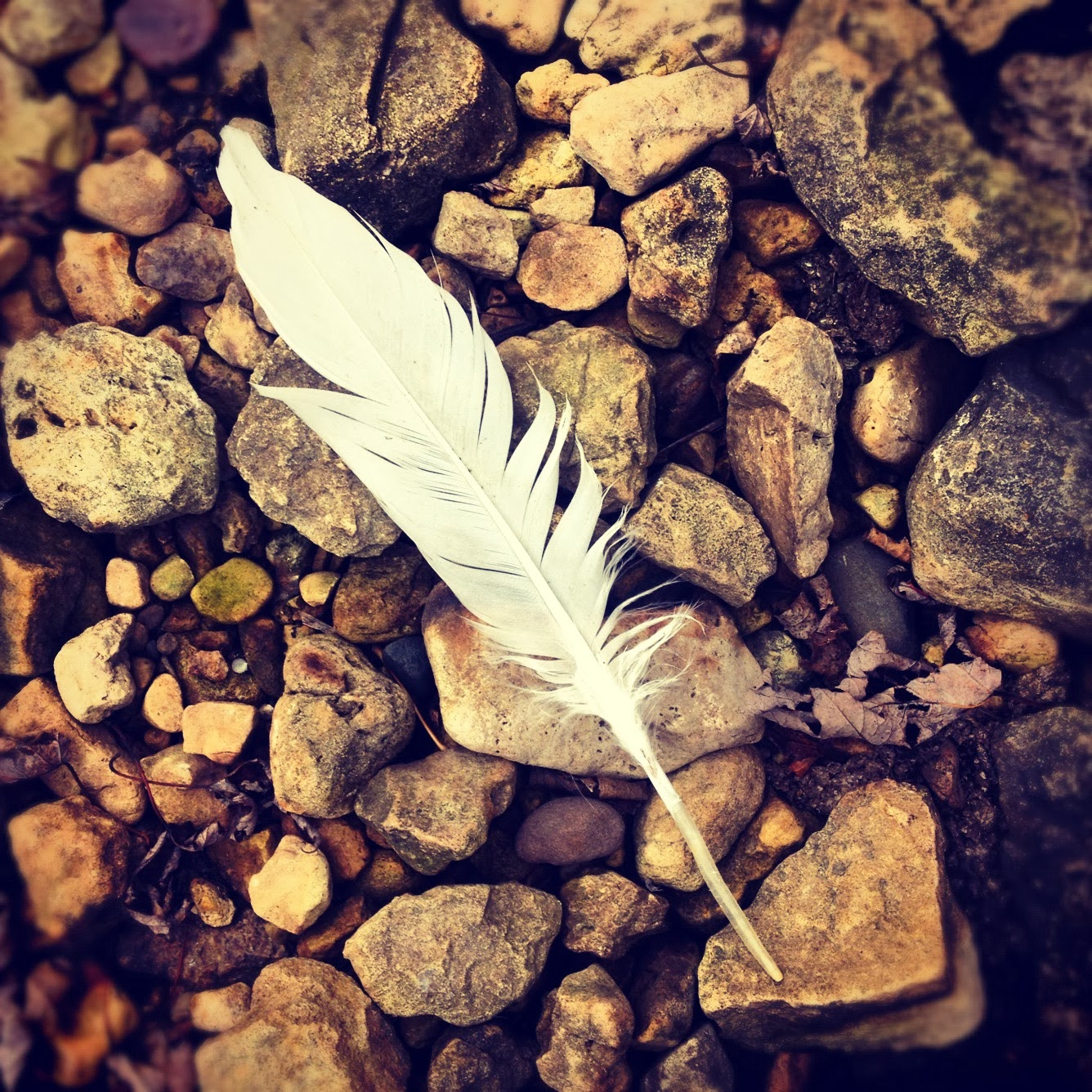 Feather on the shores of Lake Pepin at Frontenac State Park