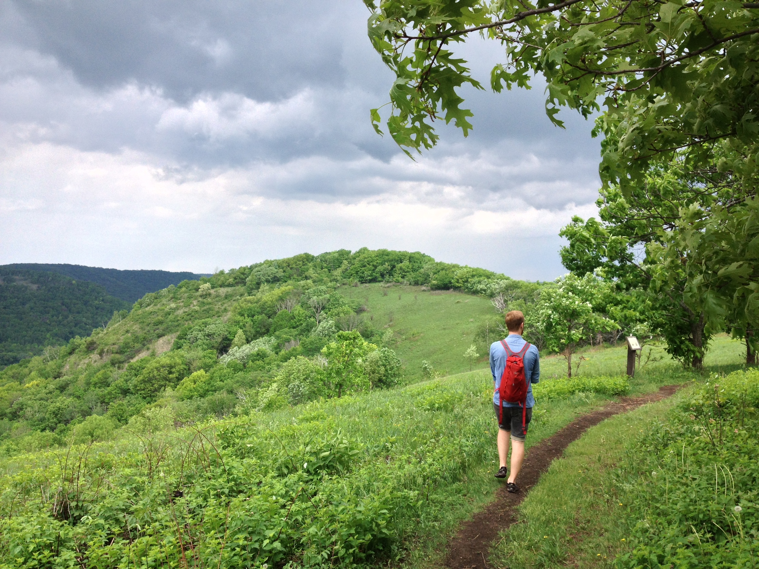 The Hiking Club Trail at Great River Bluffs State Park at the top of King's Bluff