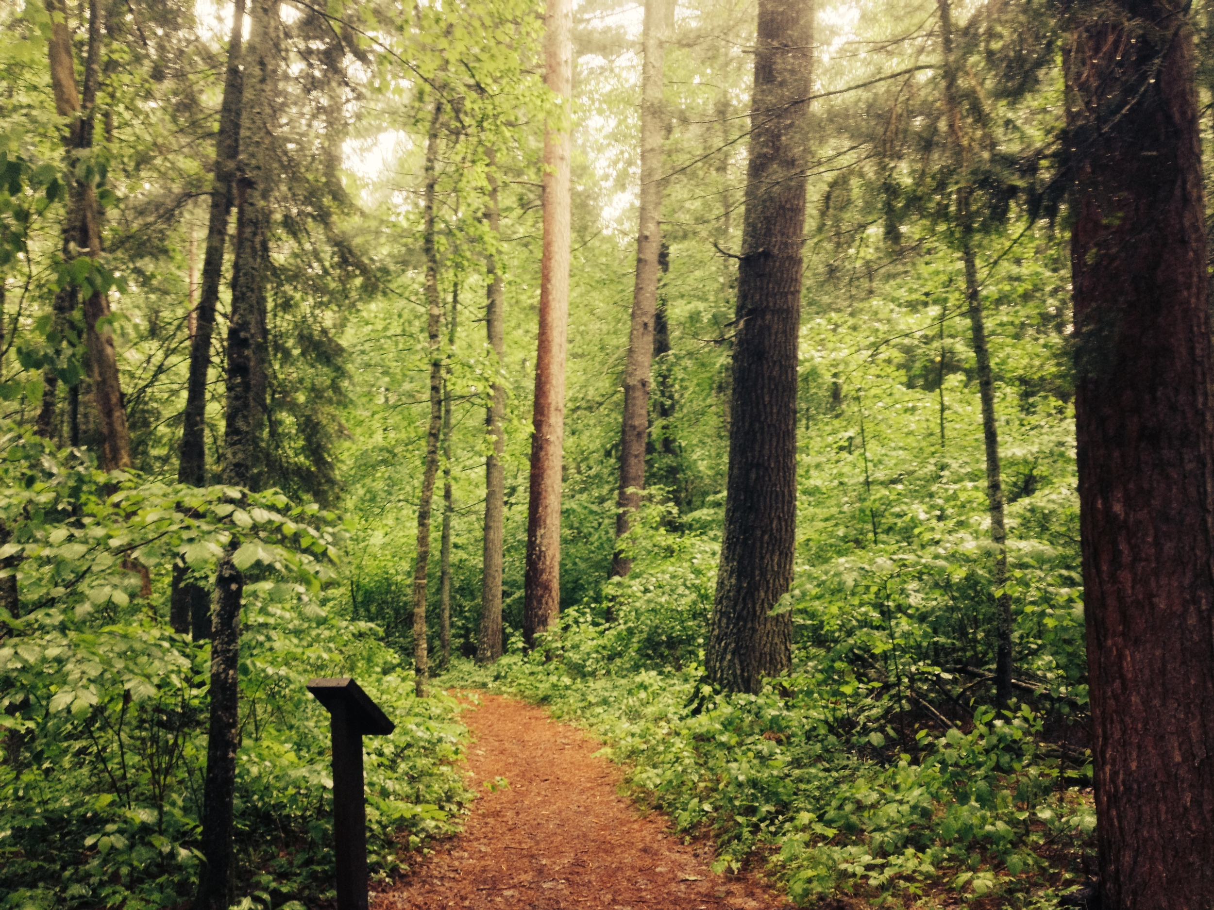 Hiking through the Lost 40 SNA in Chippewa National Forest