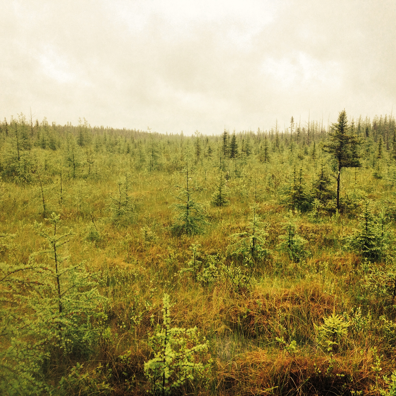 An eerie landscape at Big Bog State Recreation Area