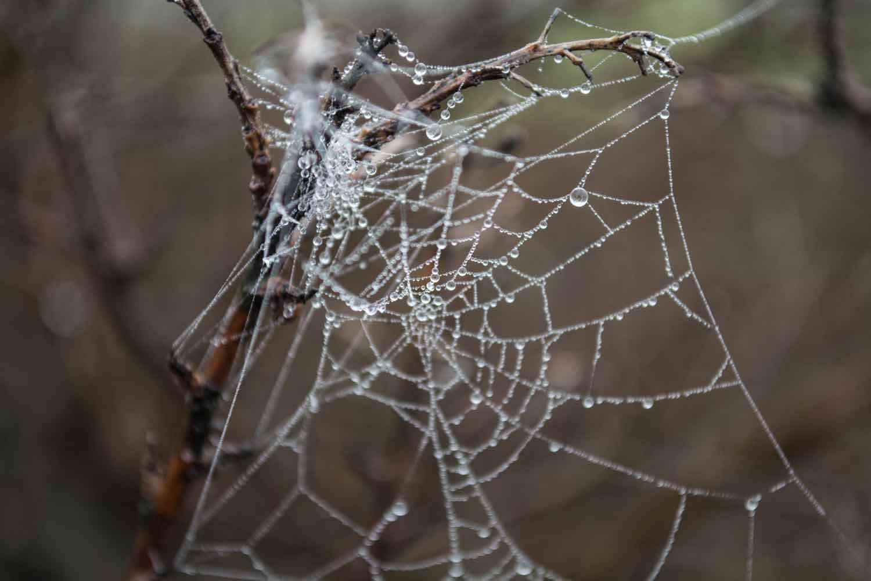 spiderweb.jpg