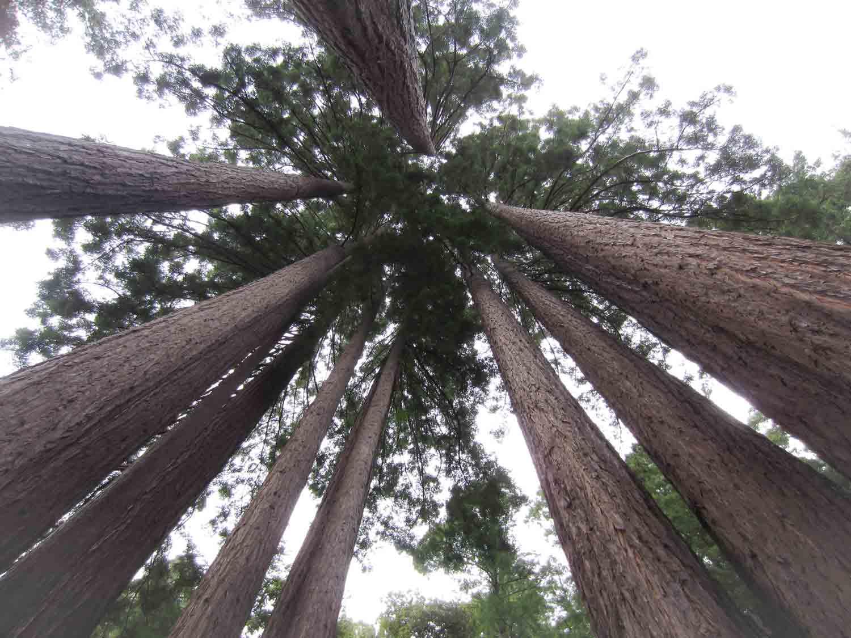 Trees_LookingUp.jpg