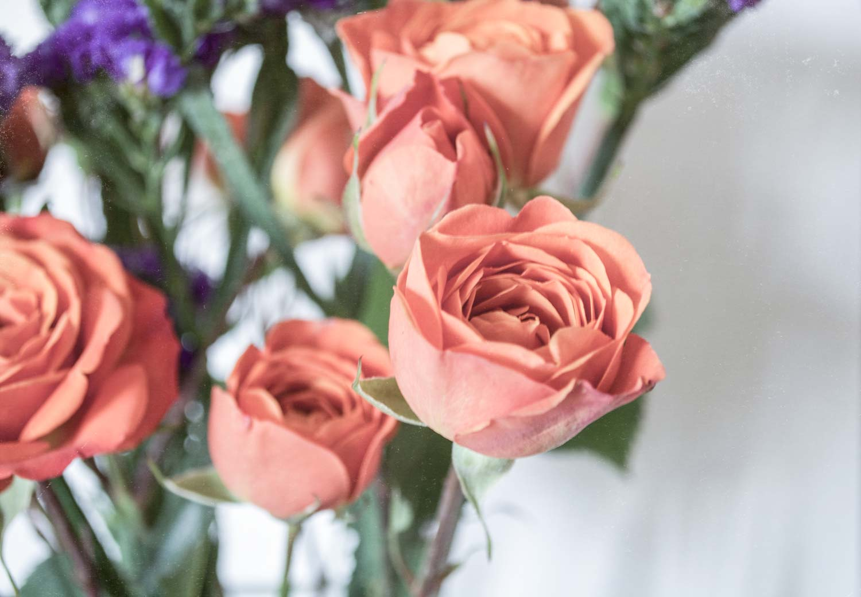orangeroses.jpg