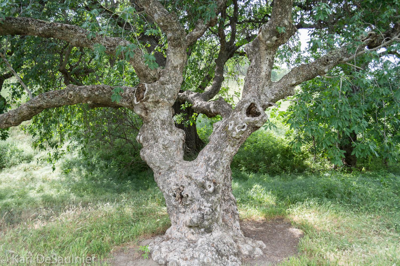 treeman-1.jpg