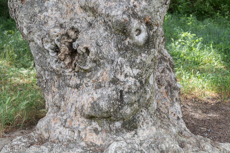 treeman-3.jpg