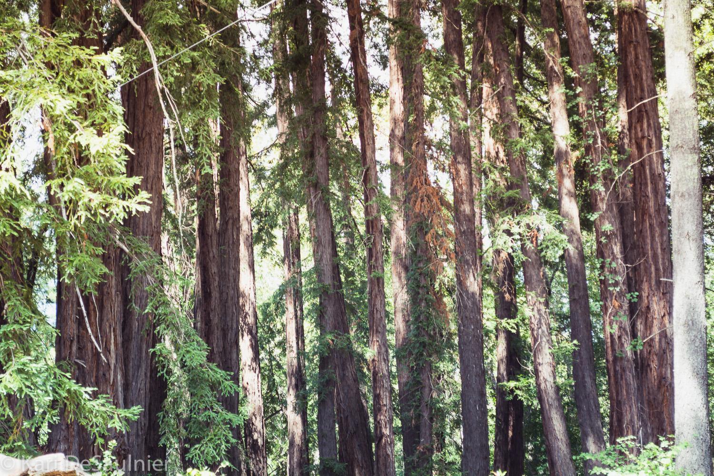 treestreestrees.jpg