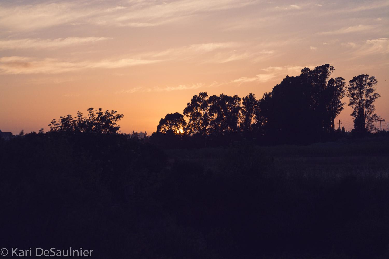Shollenberger-8.jpg