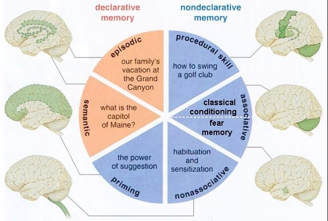 Different forms of memory, from  quora.com