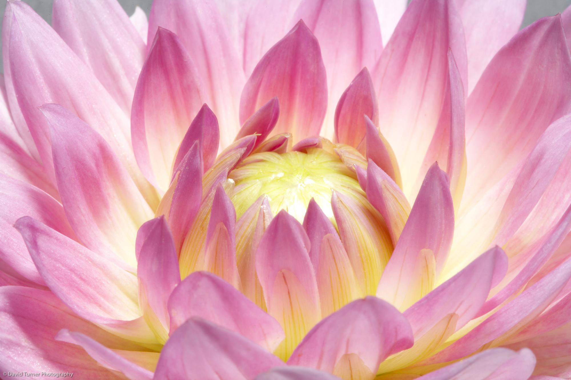 FLOWERS-052.jpg