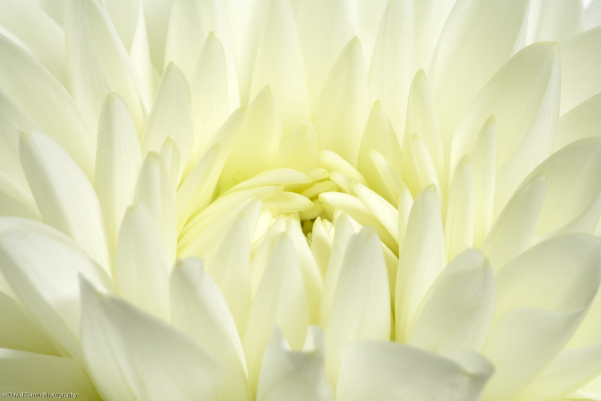 FLOWERS-309.jpg