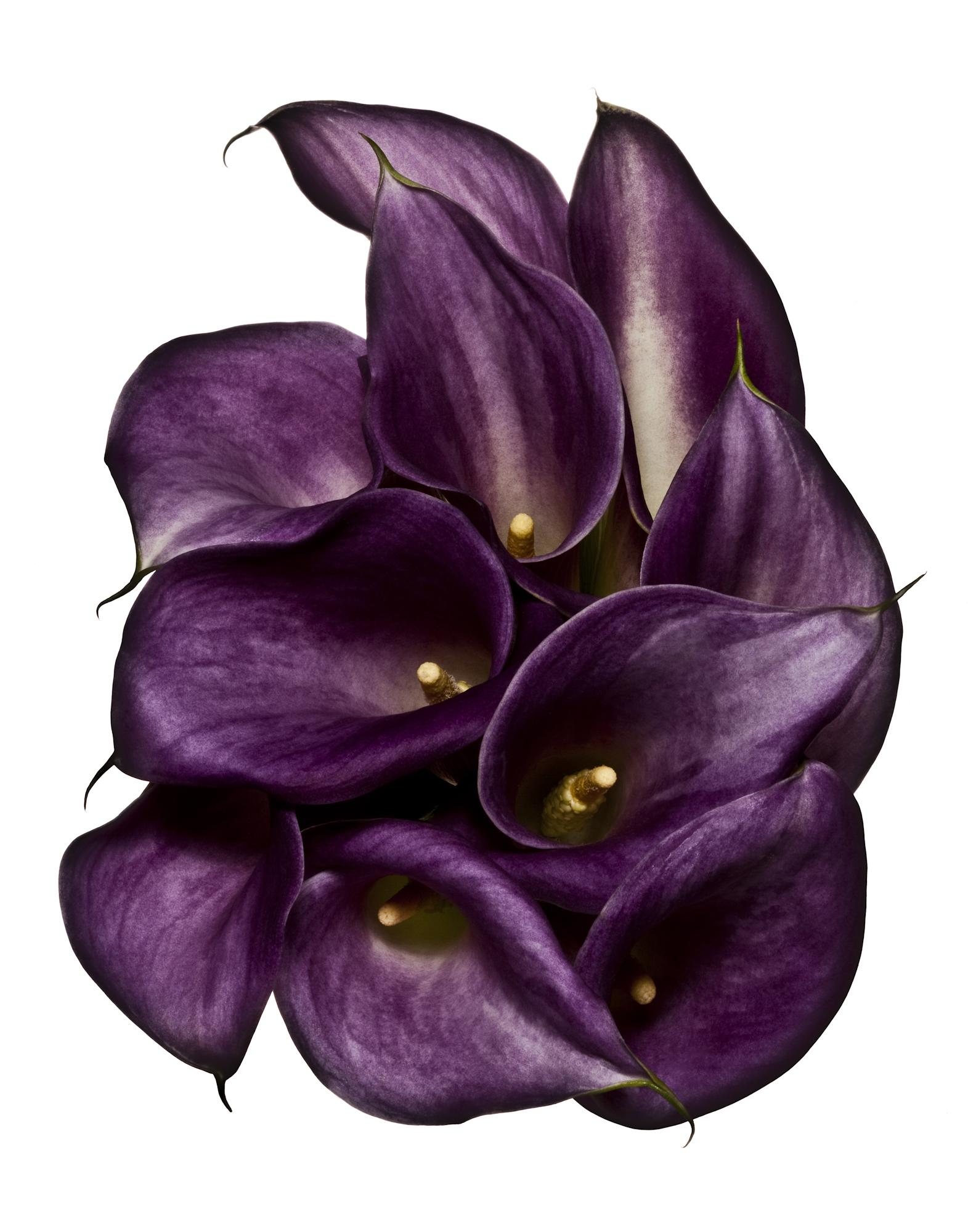 FLOWERS-616-Edit-3.jpg
