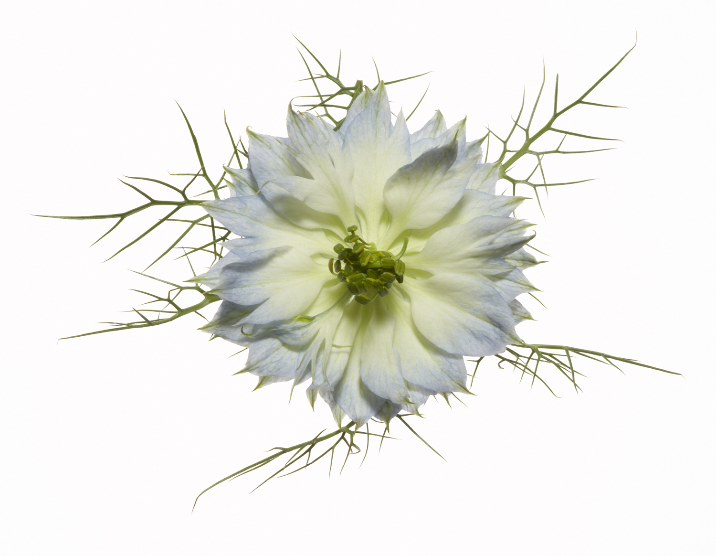 FLOWERS-228.jpg
