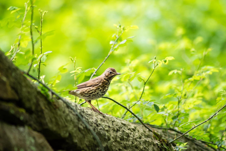 Endcliffe Birding_01.jpg