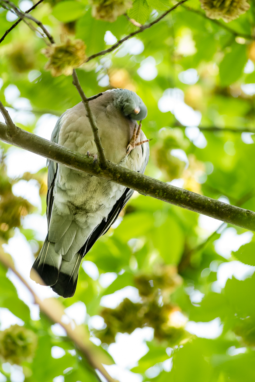 Endcliffe Birding_02.jpg