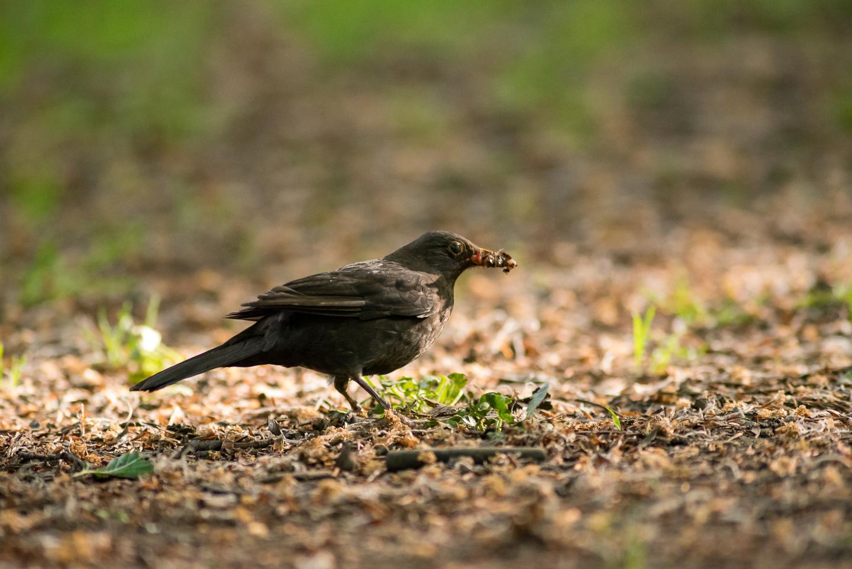 Endcliffe Birding_03.jpg