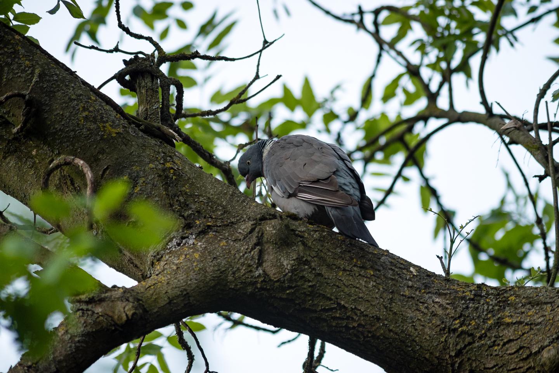Endcliffe Birding_04.jpg